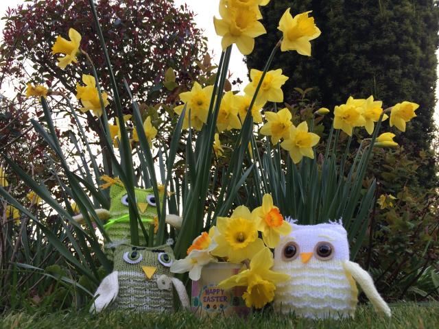 Daffodil Owl